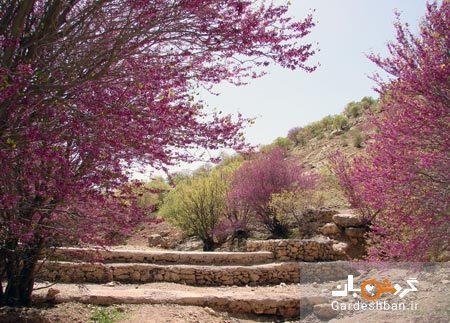 دره ارغوان ایلام؛ بهشت رنگ ها