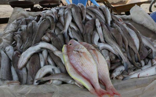 ماهی 30 درصد گران شد