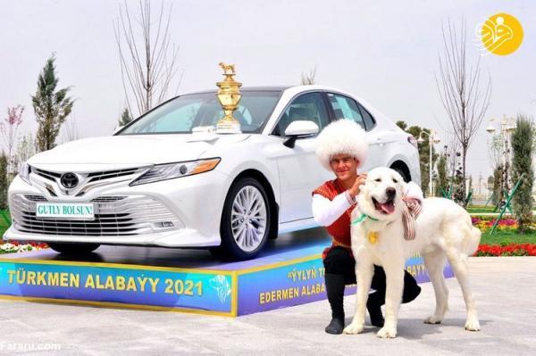 (تصاویر) جشن ملی در ترکمنستان به احترام نژاد سگ آلابای