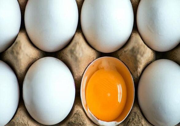 یک شانه تخم مرغ در زنجان 50 هزار تومان را رد کرد