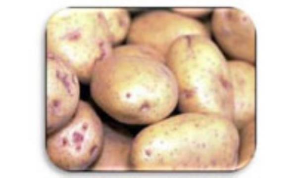 پرونده سازی برای سیب زمینی